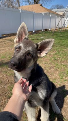 Super Cute Puppies, Baby Animals Super Cute, Cute Baby Dogs, Cute Little Puppies, Cute Funny Dogs, Cute Dogs And Puppies, Cute Little Animals, Cute Funny Animals, Cute Pets