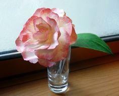 paperflower camellia