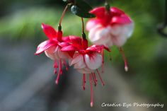 Fine Art, Flowers, Plants, Flora, Plant, Visual Arts, Royal Icing Flowers, Flower, Florals