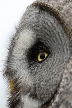 Owl <3!