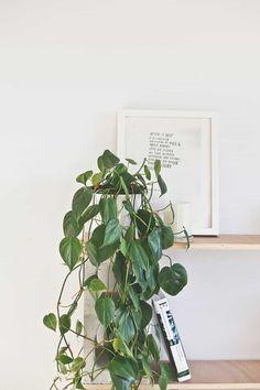 Stunning Indoor Plants That Dont Need Sunlight