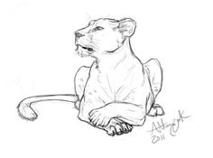 animal sketches DeviantArt is the worlds largest online social community for artists and art enthusiasts, allowing people to connect through the creation and sharing of art. Lion Drawing, Painting & Drawing, Pencil Art Drawings, Art Drawings Sketches, Animal Sketches, Animal Drawings, Lion Sketch, Lioness Tattoo, Art Du Monde