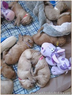 nuggety puppies