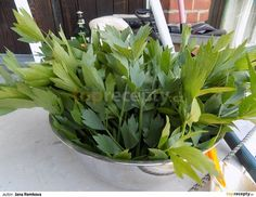 Libeček pořádně osprchujeme a pomeleme na masovém strojku. Dáme do hrnce, přidáme vodu a vaříme 15 minut. Směs scedíme přes bílé plátýnko,... Kraut, Celery, Food And Drink, Homemade, Vegetables, Drinks, Cooking, Plants, Smoothie
