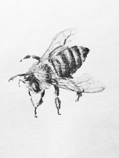 hannah haworth honeybee drawing