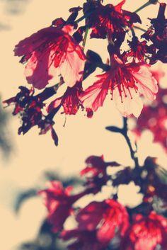 rojo red árbol tree ramas branch hojas leaves flores flowers photography fotografía miraquechulo
