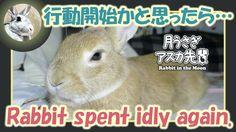 行動開始かと思ったら・・・【ウサギのだいだい 】Rabbit spent idly again. 2016年6月1日