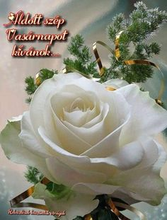 Love Rose, My Flower, Pretty Flowers, White Roses, White Flowers, Red Roses, Ronsard Rose, Coming Up Roses, Garden Pictures