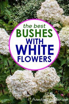 Of The Best White Flowering Shrubs I love these bushes with white flowers to use in my garden design. They will look beautiful in my blue and white backyard garden landscaping. Front Yard Landscaping, Backyard Landscaping, Landscaping Ideas, Backyard Ideas, Farmhouse Landscaping, Patio Ideas, Outdoor Ideas, Garden Shrubs, Shade Garden
