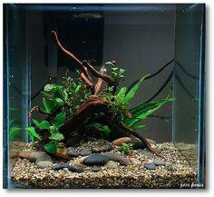 Really cool cube aquarium