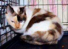 Molly - para ADOÇÃO - pORTUGAL Quer saber mais sobre a Molly? Escreva-nos para gatos.a.solta@gmail.com Esterilizada, Vacinas em Dia, Desparasitada. Disponível desde 2015/1/8. Contacto para Adopção:  Nome: Gatos à Solta Localidade: Lisboa (Zona Lisboa) Email: gatos.a.solta@gmail.com Site: gatosasolta.blogspot.pt