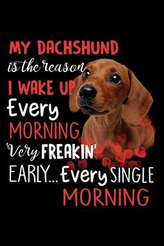 Dachshund Quotes, Dachshund Art, Baby Dogs, Dachshunds, Dog Treats, Dog Love, Animal Pictures, Love Quotes, Cute Animals