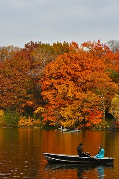 A Romantic Outing in Autumn, Central Park, New York City