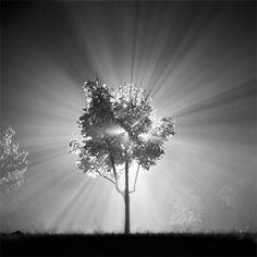 Tree of light.