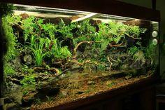 Aquarium Terrarium, Diy Aquarium, Aquarium Design, Aquarium Fish Tank, Reptile Cage, Reptile Enclosure, Tropical Plants, Tropical Fish, Aquatic Insects