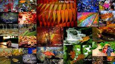 ART'é FvG blog: Raccolta immagini gruppo Artè