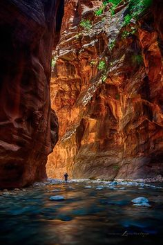 Virgin River Narrows, Zion National Park, UT, USA