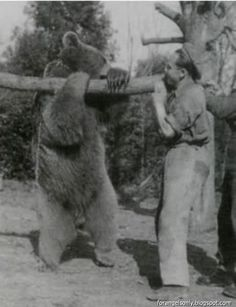 """Wojtek was a 'Soldier Bear' in the Polish army. He enjoyed smoking and eating cigarettes. He enjoyed wrestling and was taught to salute when greeted. As one of the officially enlisted """"soldiers"""" of the company, he lived with the other men in their tents or in a special wooden crate transported on lorries. According to numerous accounts, during the Battle of Monte Cassino, Wojtek helped his patrons by transporting ammunition, never dropping a single crate.  ..."""