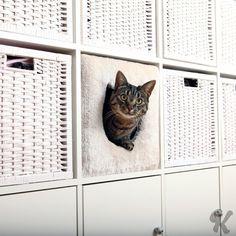 Kattehule til IKEA-hylle