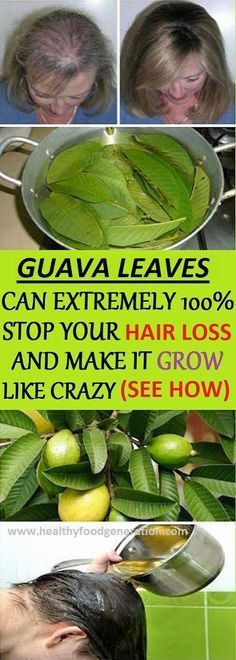 Health Benefits of Guava Leaves: Hair – Guava leaves are a great remedy for hair loss. They contain vitamin B complex (pyridoxine, riboflavin, thiamine, pantothenic acid, folate and niacin) which stops the hair fall and promotes hair growth. Boil a handfu