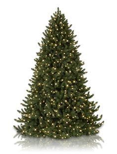 Vermont White Spruce Artificial Christmas Trees, Vermont White Spruce LED Pre Lit Christmas Trees   Balsam Hill Australia