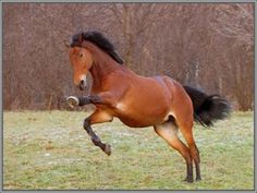 Photo by Cosmiccathorse Most Beautiful Animals, Horses, 35, Loom Animals, Belle, Photos, Horse
