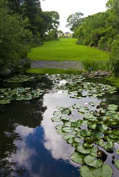 Monets Envy-The Romantic view of our Waterlilly Pond. Private Wedding, Country Estate, Photo Location, Intimate Weddings, Perfect Place, Stepping Stones, Pond, Lawn, Wedding Photos