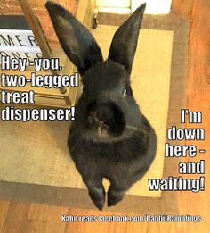 Top 20 Funny Bunny Pictures - The Funy. Cute Bunny Pictures, Rabbit Pictures, Funny Animal Pictures, Rabbit Jokes, Funny Rabbit, Cute Baby Bunnies, Funny Bunnies, Funny Animal Memes, Cute Funny Animals