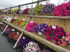 Viridalia 2017, un éxito en su séptima edición Petunias, Floral Wreath, Wreaths, Plants, Home Decor, Floral Crown, Decoration Home, Door Wreaths, Room Decor