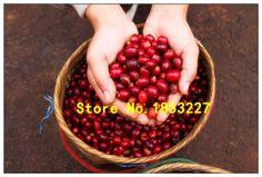 Pure Arabic Coffee Bean Seeds, Fresh Arabica Coffea Tree Seeds - 100% Natural Coffee Bean Seeds 5PCS/bag
