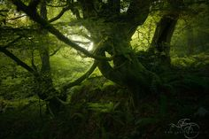 Guardians of the forest by Enrico Fossati on 500px