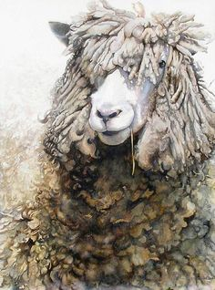 Ann Balch Cotswold ram with straw in his mouth