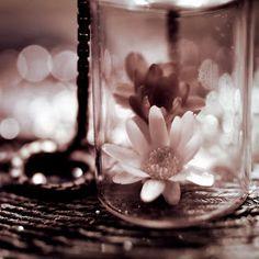 vintage, wallie, wallpaper, cute, jar, flowers