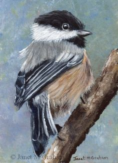 "Daily Paintworks - ""Black Capped Chickadee ACEO"" - Original Fine Art for Sale - © Janet Graham Small Canvas Paintings, Animal Paintings, Watercolor Bird, Watercolor Paintings, Vogel Illustration, Bird Drawings, Bird Pictures, Pastel Art, Impressionism"