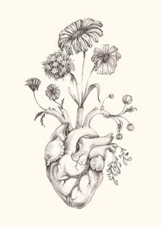 """IMPROVED 5x7"""" PRINT of original drawing """"Blooming Heart"""" on NEW ivory paper- graphite, art, anatomy, floral, heart, valentine"""