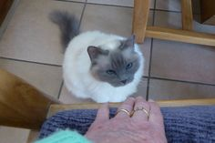Naughty Daisey is planning to bite in my fingers