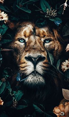 Beautiful golden lion in the jungle surrounded by golden and orange flowers, lovely butterflies and a sunflower. This male lion poster is great as an artprint for decoration in your home. Lion Images, Lion Pictures, Nature Pictures, Lion Wallpaper, Animal Wallpaper, Galaxy Wallpaper, Photo Wallpaper, Rose Wallpaper, Animals And Pets