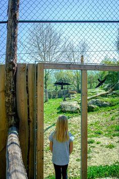 In Herberstein können die Löwen hautnah beobachtet werden! #löwengehege #herberstein #tierweltherberstein #tierpark #zoo Types Of Animals, Nature, Animales, Lawn And Garden