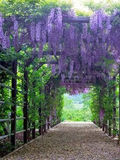Amazing Backyard Garden Ideas with Inspirations Pictures (68) #BackyardGardening