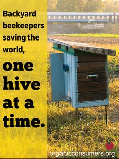 One hive at a time, backyard beekeepers try saving the world