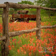 Wagon In Paintbrush - Texas Wildflowers Wagon Fence Landscape Flowers by Jon Holiday Fort Worth, TX