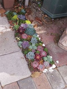 Succulent landscape idea from California Cactus Center
