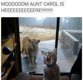 34 memes que solo entiendes cuando los gatos son tu L - Lustige Katzen - Funny Animal Quotes, Funny Animals, Cute Animals, Animal Humor, Funny Sayings, Cute Animal Photos, Funny Animal Pictures, Make Funny Faces, Cat People