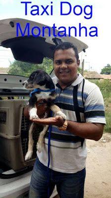 TAXI DOG MONTANHA TRANSPORTE DE ANIMAIS NO RIO DE JANEIRO: TIJUCA para SÃO GONÇALO