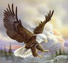 In flight majestic. Eagle Pictures, Bird Pictures, Beautiful Birds, Animals Beautiful, Eagle Drawing, Eagle Painting, Eagle Art, Eagle Tattoos, Birds Of Prey