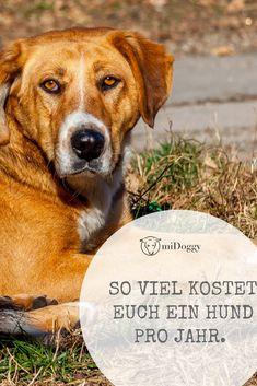 || #Hund || Ideen || #Hunde || Tipps || Tricks || Ideen || Liebe || Welpen || Bilder || #Geld