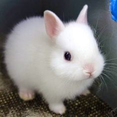 This is a picture of a cute bunny. In the story the bunny represents safety and peace to Lennie.