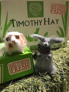 Introducing Daphne the Rabbit and Rupert the Guinea Pig. They are our UK reps (new hires, so big welcome everyone). Welcome to the team, Daphne and Rupert. Belinda is looking forward to working with you. Pet Fresh, Welcome To The Team, Guinea Pigs, Rabbits, Pets, Big, Animals, Animals And Pets, Animales