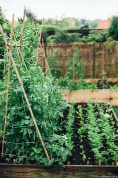 Choosing a new design for your vegetable garden? Create a neat and better one with our vegetable garden design ideas! Choosing a new design for your vegetable garden? Create a neat and better one with our vegetable garden design ideas! Veg Garden, Edible Garden, Vegetable Gardening, Small Vegetable Gardens, Veggie Gardens, Garden Planters, Garden Hose, Garden Art, Raised Garden Beds