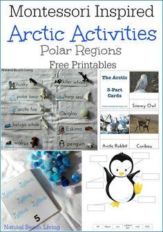 lesson 16 activity polar bears and penguins meet